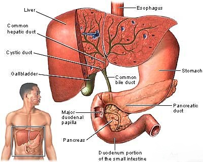 Gallstones there are conditions found in the area of the gall bladder causing a blockage of the common bile duct or of the cystic duct which feeds from the gall ccuart Image collections